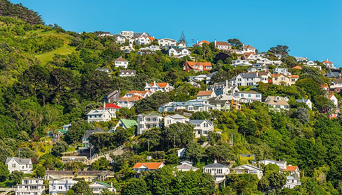 House prices steady in January, REINZ